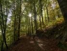 Im Tharandter Wald