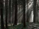 Morgensonne im Wald