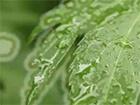 Xalen . Natural things . Only rain (2011) -- Xalen . Natural things . Only rain (2011)  Komposition und Arrangement von Ronny Metzger aufgenommen im Homeworks Studio 2008. Gefilmt mit Canon EOS im OEG